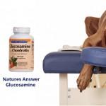 Diminish Arthritis Pain In Dogs