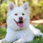 How To Give Your Dog A Flea-Less Life