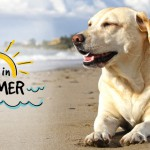 Tips To Care For Pet Friends In Hot Summer