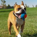 Dog Fitness Tips