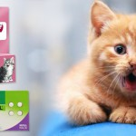 Hear worm prevention in cats