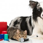 prepared for any pet emergencies or health situations to deal with