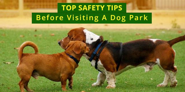Dogs park visit