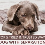 dog separation anxiety symptoms