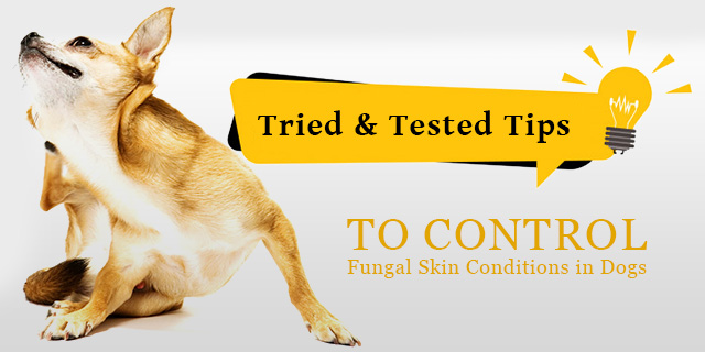 Environmental factors, sensitive skin, allergens, lack of cleaning skin and coat