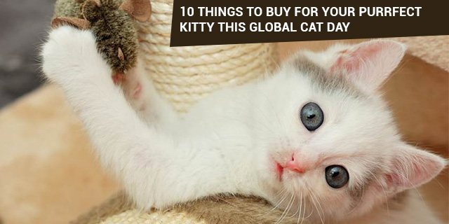 10 things to buy for your cat