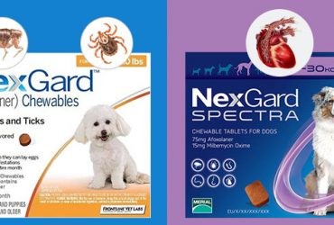 Nexgard-Sepectra-and-Nexgard