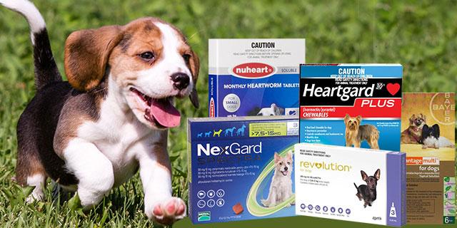 heartworm-treatments-or-preventatives