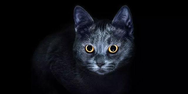 Nocturnal-Behaviour-In-Cats