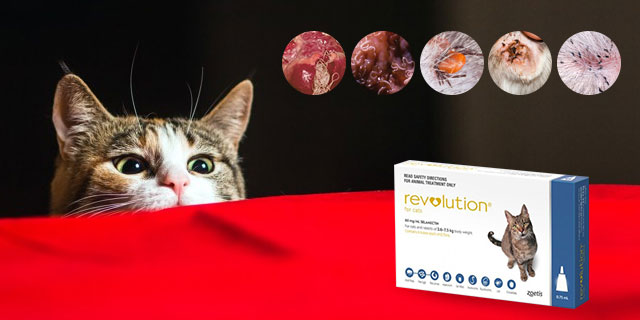 Revolution-for-cats