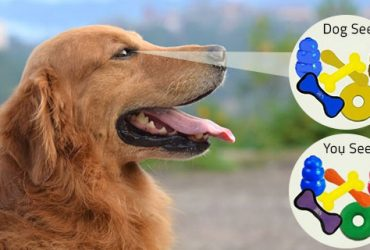 Dogs-Can-See-Colors