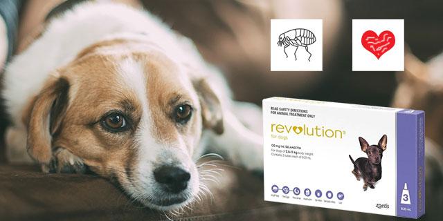 revolution-for-dogs-purple