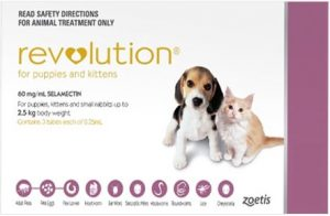 revolution-dog-pink-pack