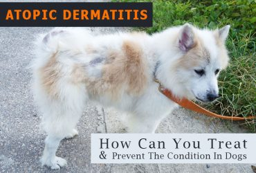 Dog Skin Allergy Treatment Archives Canadavetexpress Pet Care Tips