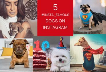 popular-dogs-on-instagram