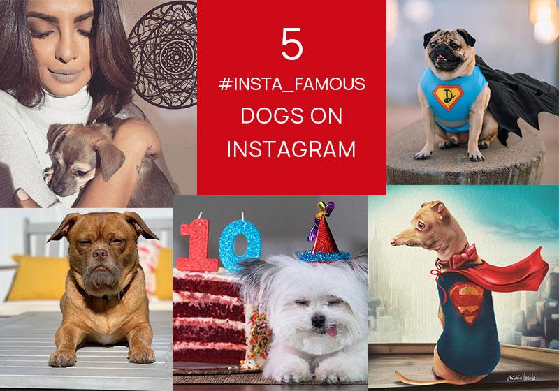 popular-dogs-on-instagram