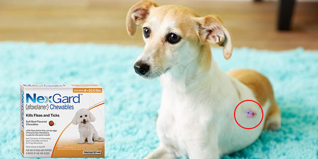 nexgard-chewables-for-dogs-for-lyme-disease