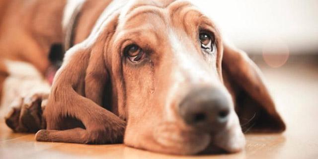 do-dog-cry