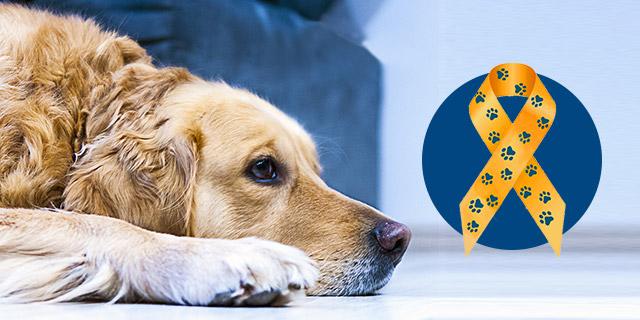 dog-cancer-myths