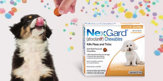 Nexgard-Afoxolaner-in-dogs