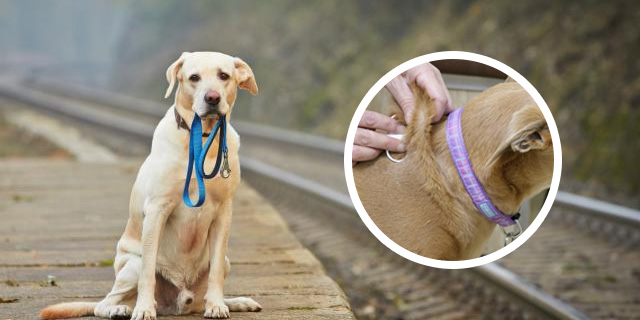 National-Lost-Pet-Prevention-Month