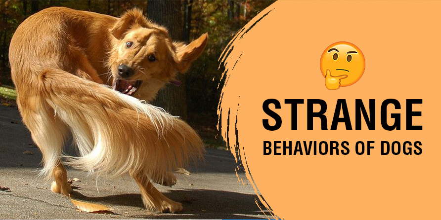 Unpacking 6 Strange And Weird Dog Behaviors