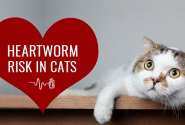 heartworms-in-cats