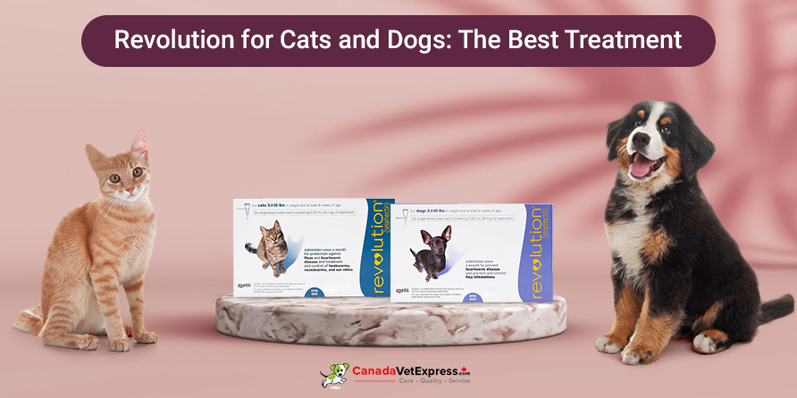 Revolution for Cats and Dogs: The Best Treatment