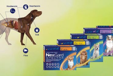 NexGard-Spectra- for- Dogs