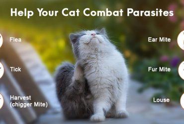 Help-Cat-Combat- Parasites