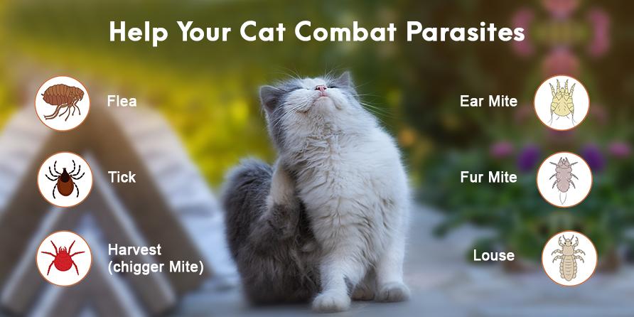 Help Your Cat Combat Parasites