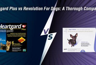 Heartgard Plus vs Revolution For Dogs