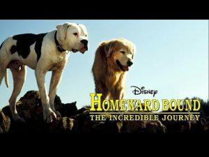 Celebrate National Dog Week - Homeward Bound The Incredible Journey -Best Dog Movie