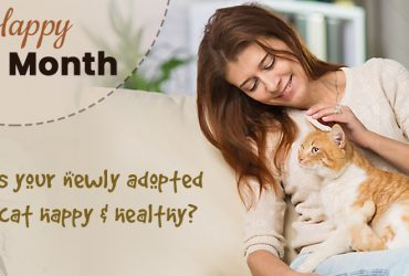 Is Your Newly Adopted Cat Happy & Healthy?