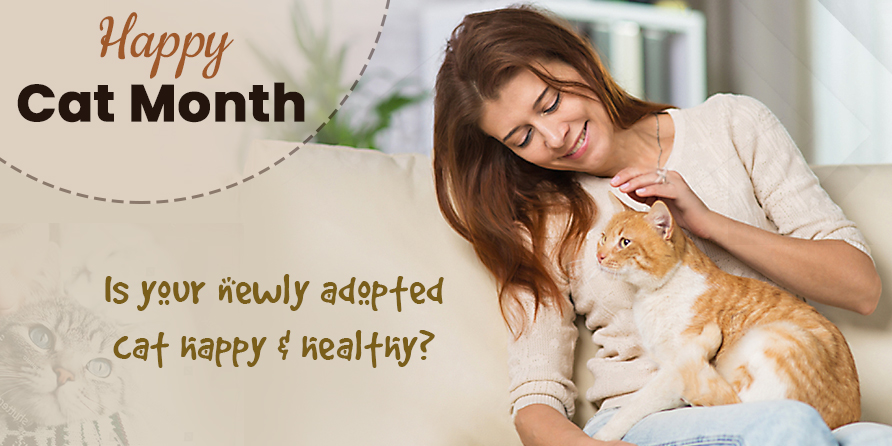 Happy Cat Month: Is Your Newly Adopted Cat Happy & Healthy?