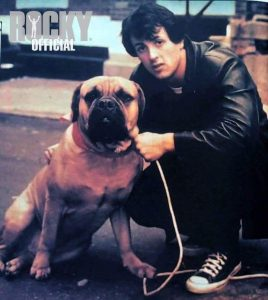 Celebrate National Dog Week- Rocky -Best Dog Movie
