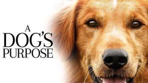 Celebrate National Dog Week - A Dog's Purpose Best Movie